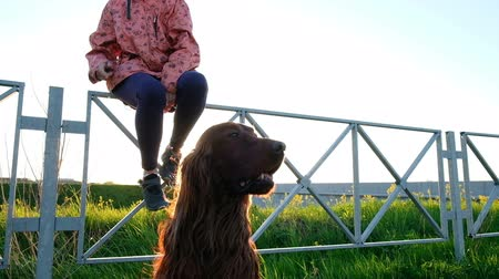 hind : Dog sits still on the grass near the highway. Woman is walking with a pet in the park at sunset, slow motion