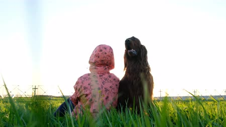 see off : Obedient dog sits still on the grass with the owner of the woman at sunset in the summer. Irish Setter is the best friend