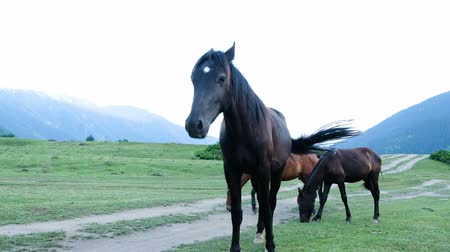 kept : Wild horses graze in a field in the mountains