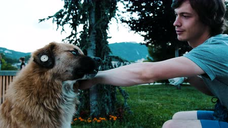 žehlení : Man feeds a stray dog with a piece of bread and cheese. A guy stroking a good dog