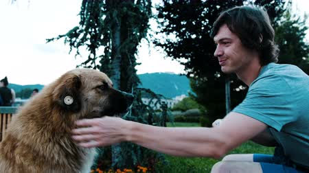 caresses : Man shares a meal with a stray dog with a piece of bread. Guy stroking a chipped good dog in the park Stock Footage