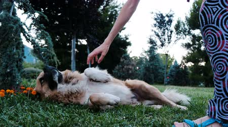 caresses : Woman strokes and scratches a chipped stray dog in the park
