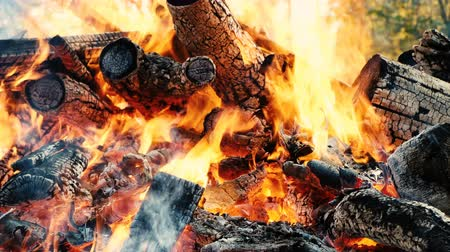 szépen : Bonfire burns down in the forest in autumn, sticks and coals in fire close up, slow motion Stock mozgókép