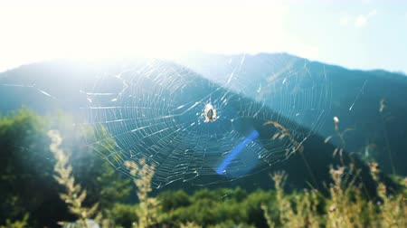 oturur : Spider jogger sits on the web on a sunny day in nature in the summer against the backdrop of a mountain landscape. Stok Video