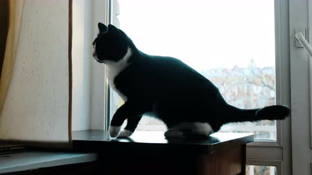tlapky : Cats fighting play at home on the table. Black and red cats funny waving paws Dostupné videozáznamy