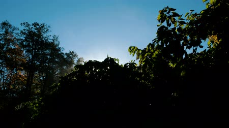 пробуждение : Morning evaporation on the tree, steam rises in the sun at dawn