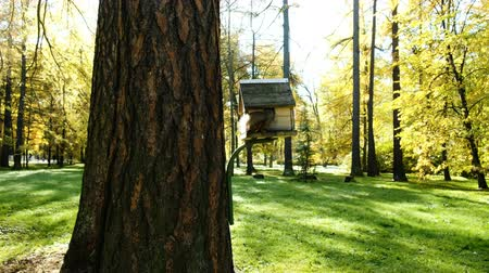 besleyici : Funny squirrel climbs into the feeder on a tree for a nut in the park