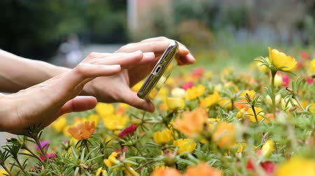 macro fotografia : Woman shoots flowers on a smartphone and presses the phone screen close-up Vídeos
