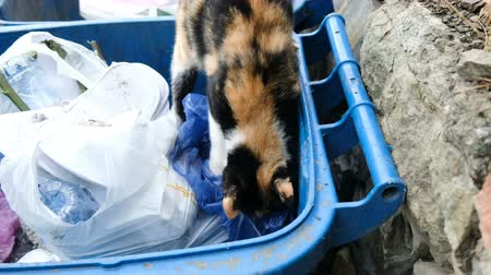 litter box : Homeless hungry cat is looking a food in the trash, animal digging in bags