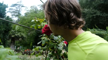enjoys : Funny man is smelling a big red rose on a tree, slow motion Stock Footage