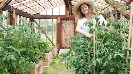 abobrinha : Woman farmer in a straw hat gathers the harvest in the greenhouse, panoramic camera movement Stock Footage