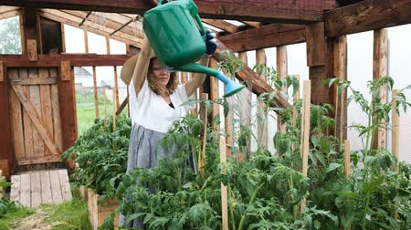 courgette : Stylish happy young woman in straw hat and dress pours watering crops in a greenhouse Stockvideo