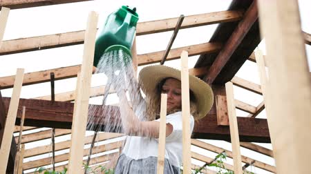 цуккини : Stylish woman in straw hat and dress pours watering crops in a greenhouse close-up