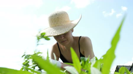 strohoed : Woman in a straw hat is engaged in weeding the grass on the garden in a vegetable garden