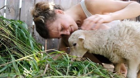 cordeiro : Young woman stroking a white sheep on a farm a lamb chewing grass