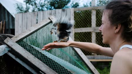 padok : Chicken takes off from the hand of a woman in his chicken coop, slow motion flap