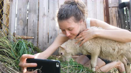 koyun : Girl takes a selfie with a sheep in a farm pen in the summer, the lamb chews grass