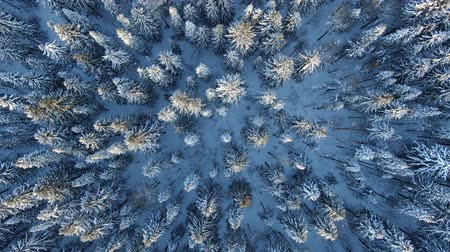 вертикально : Epic aerial view of the winter forest at sunset, the drone rises vertically upwards, a top view of the fir forest.