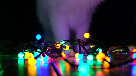 zahmetsiz : Domestic cat playing with festive garlands on the floor Stok Video