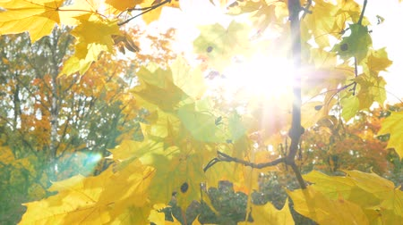 orta hava : sunbeams make way through leaves swaying in wind close view
