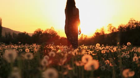 sylwetka : Beautiful Young Woman in a Hippy Dress Walking Throug Dandelion Field at Sunset Wideo