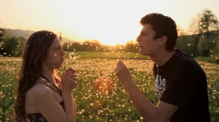 dmuchawiec : Cute Young Couple Blowing Dandelions Laughing Sunset Summer Field HD