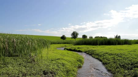 irrigação : Summer Stream Flowing through Green Grass Field Travel Background HD