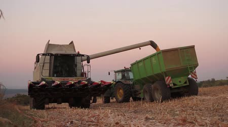 dożynki : Harvester Pouring Seed into Truck Field Corn Harvest Concept HD Wideo