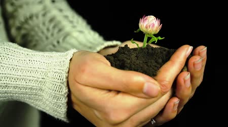 sustain : Flower in Hands Green Environment Conservation Concept