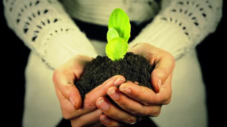 sustain : Green Plant New Life in Hands Environmental Concept Stock Footage