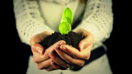 sustain : Woman Holding Green Plant in Hands Stock Footage