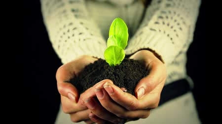 sustain : Green Leaf Plant in Hands New Life Ecology Concept Stock Footage