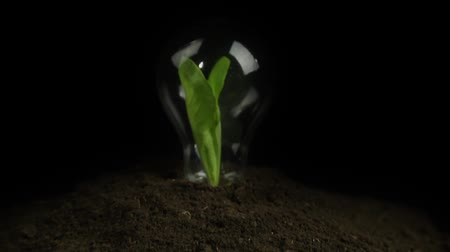 światło : Green Plant Light Bulb Glowing Energy Concept HD