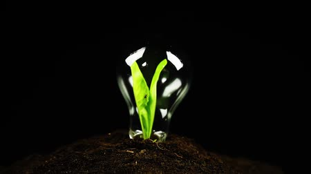 sustentável : Green Idea Ecology Concept Light Bulb Plant Insects Life