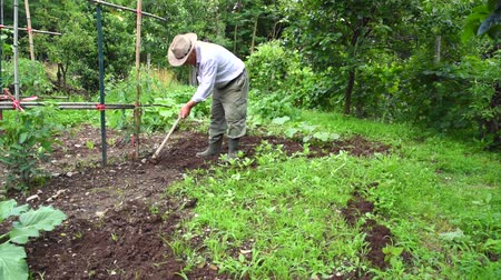 ásta : Senior man hoeing vegetable garden soil