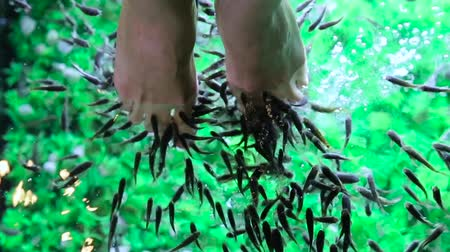 labrax : Fish foot massage for girl close up. Stock Footage