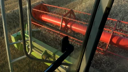 vezetett : Combine harvester treshing wheat cutterbars view. Stock mozgókép