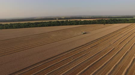 thrash : Harvester threshing wheat aerial view from afar. Stock Footage