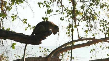 kürklü : monkey in the wild nature
