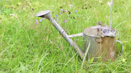 Water is poured into a large metal watering can standing in the grass