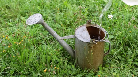 Water from a plastic large bottle is poured into an old metal watering can standing in the grass among wild flowers