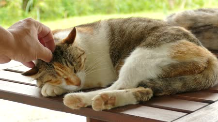 sonolento : sleeping cat lying on wooden desk in the outdoor Stock Footage