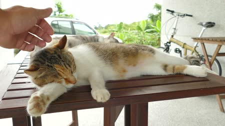 sleeping cat lying on wooden desk in the outdoor Stok Video