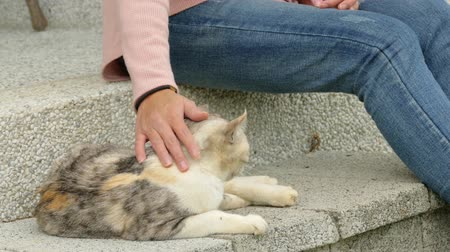 irreconhecível : Woman touch on the cat at the garden