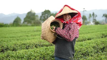 Happy woman holding the harvest in the tea farm