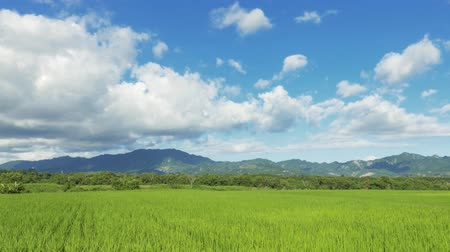 landscape of green paddy farm with clouds on sky