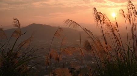 sunset scenery with orange clouds and sky at the Puli town, Nantou, Taiwan Stok Video