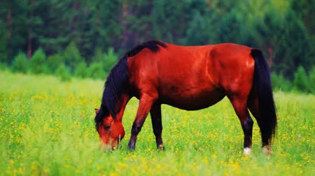 mamífero : Horses grazing in the meadow