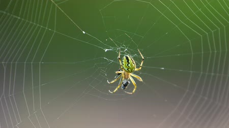 Extreme closeup of spider and web. Shot in RAW, wide dynamic range