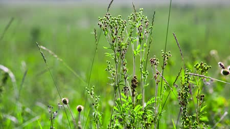 Green field of grass macro. Shot to RAW, wide dynamic range Stok Video